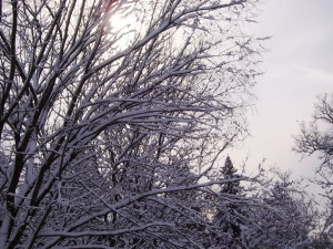 Sunshine and snow on the trees