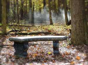 autumn leaves and empty bench from FIGURE IN THE FOREST